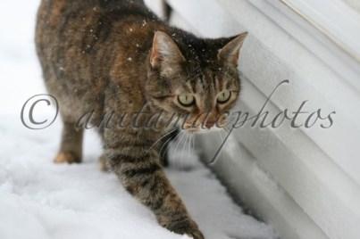 Sammie in the snow