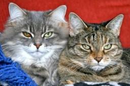 Cleo and Sammie