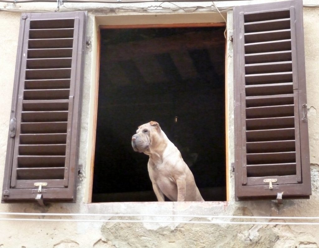 A friendly dog. San Gimignano, Tuscany.
