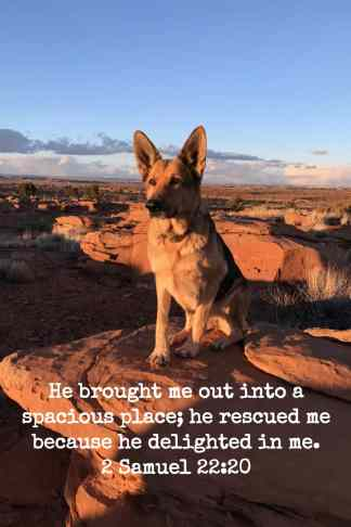 Embrace your pets http://wp.me/p7W1vk-cg