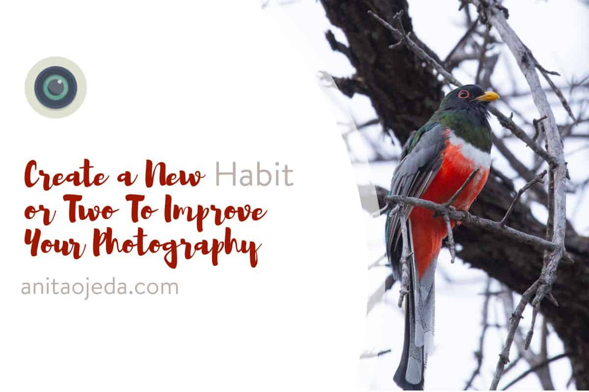 By creating a new habit or two, you can take your photos from ho-hum to stunning. #improveyourphotography #write28days #blogger #instagrammer #photogrpahy #DSLR #camera #selfcare #habit #photographytips
