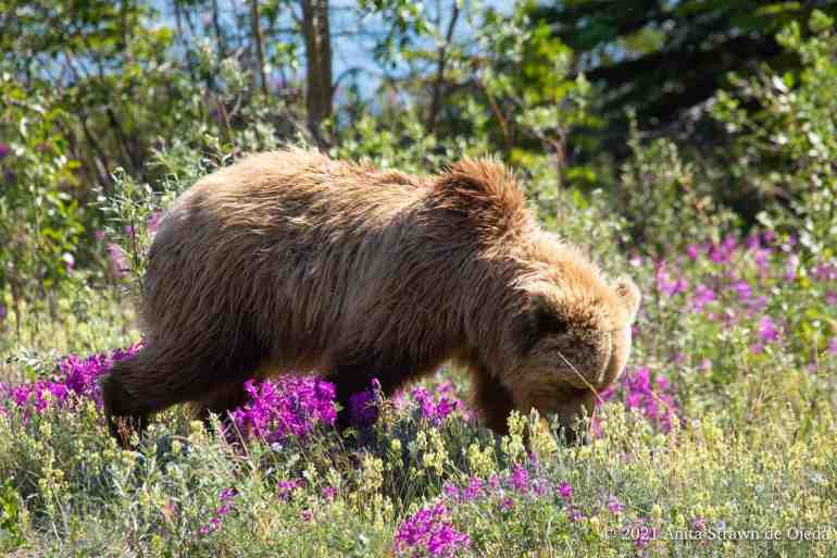 Have you ever taken once-in-a-lifetime photos only to load them onto your computer and realize they all have a problem? You can energize your photography with a good post-processing program. #improveyourphotography #write28days #blogger #instagrammer #photogrpahy #DSLR #camera #selfcare #grizzlybear