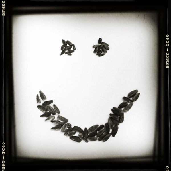 Smile Again: Day 21 Sunflower Seeds on Plain Paper