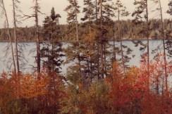 fall_trees_ne_mn
