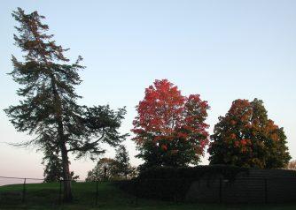 fall_trees_Edina_photo