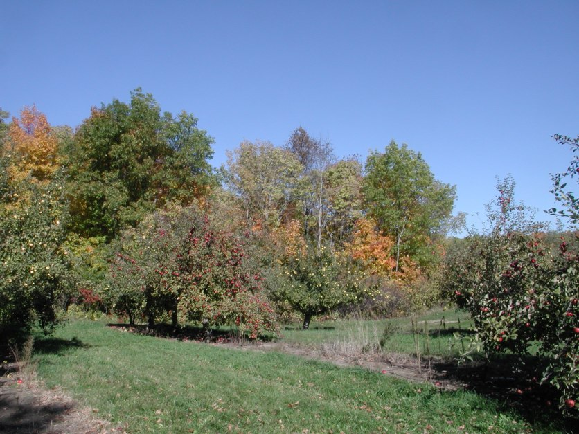 Apple Tree 120 / photo