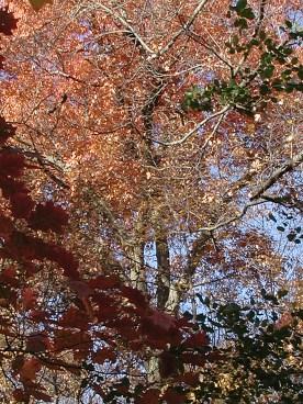 autumn_trees_Lowry