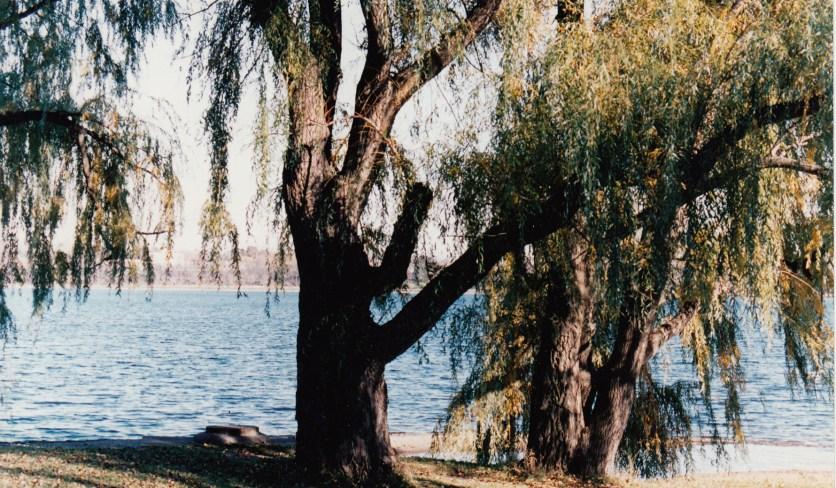 Willow on Lake Calhoun