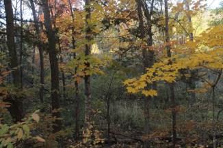 blanket of golden leaves