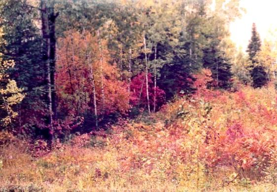 fall_color_northern_Minnesota