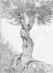 witch_tree_drawing