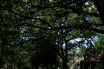 tree_2997