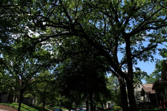 tree_3001