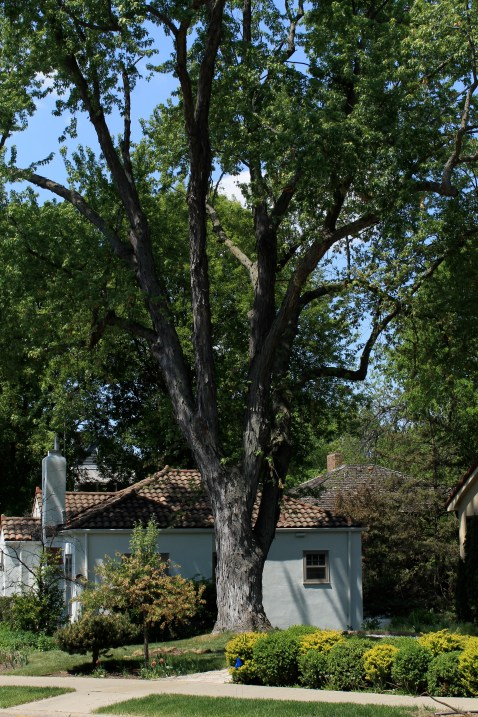 tree_3007