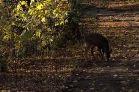 deer_1503