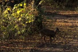 deer_1504