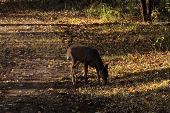 deer_1506