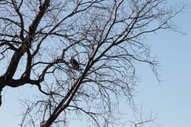 eagle_2089