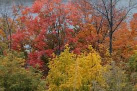 fall_color_Harriet_Island_1211a