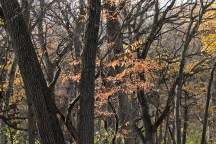 fall_color_trees_1492