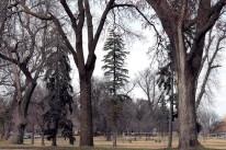grove_of_trees_3717