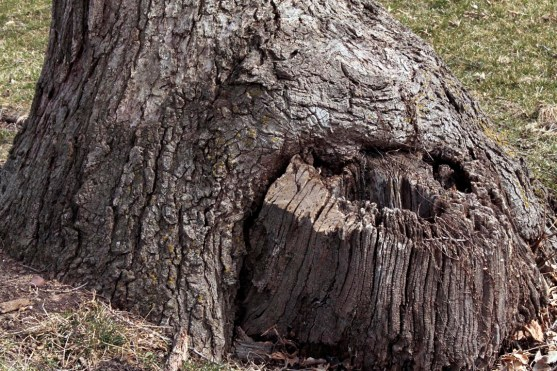 tree_stump_3735
