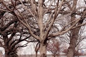 tree_3759