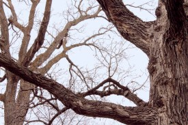 tree_3813