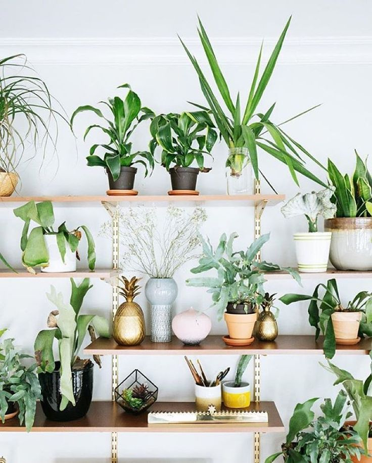 plant shelfie / DIY branch wall This article is cornerstone content