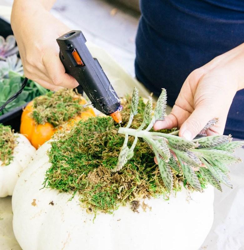 DIY Pumpkin Succulent Fall Decor Home
