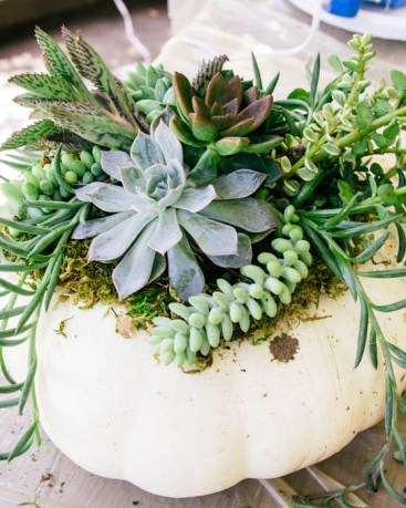 FALL DIY Pumpkin Succulent