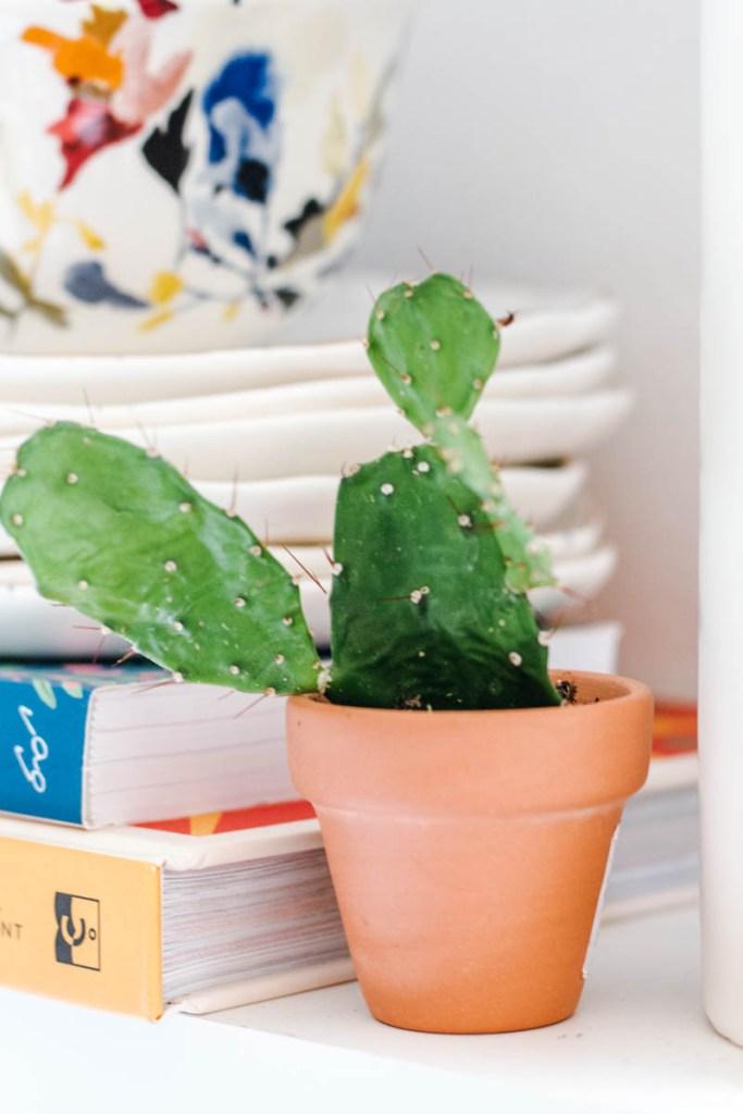 mini baby cacti kitchen shelves