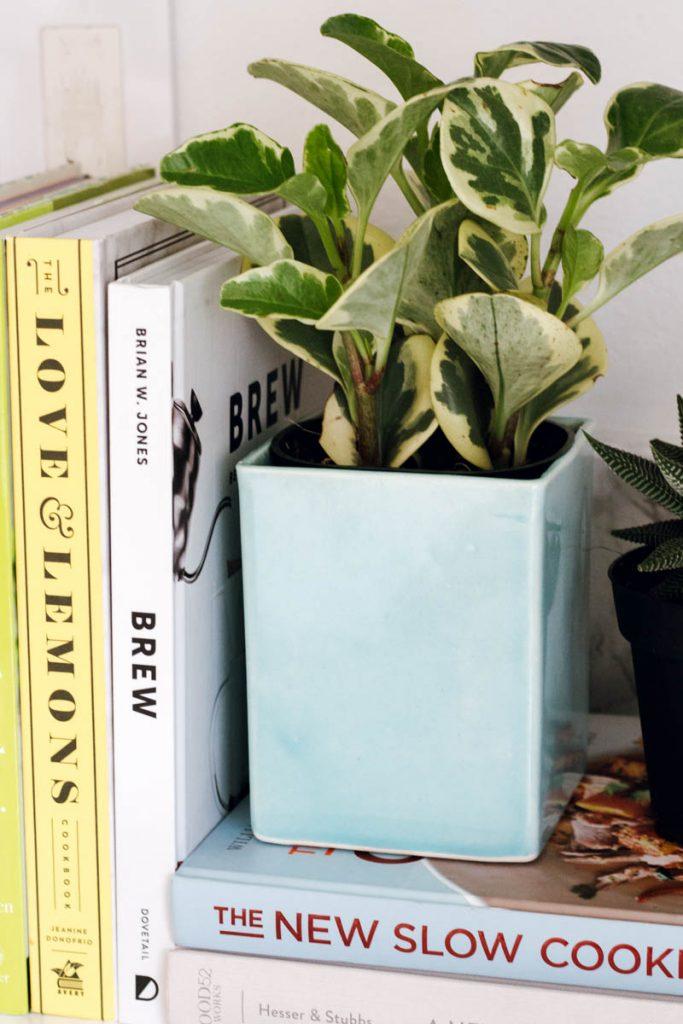 the sill planter cook books