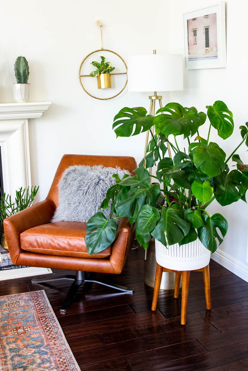 west elm monstera living room corner