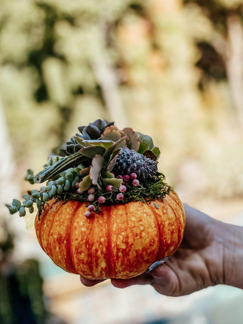 Holding a DIY succulent pumpkin