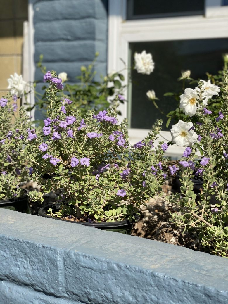 A close up of the flower bed in front of the picture window