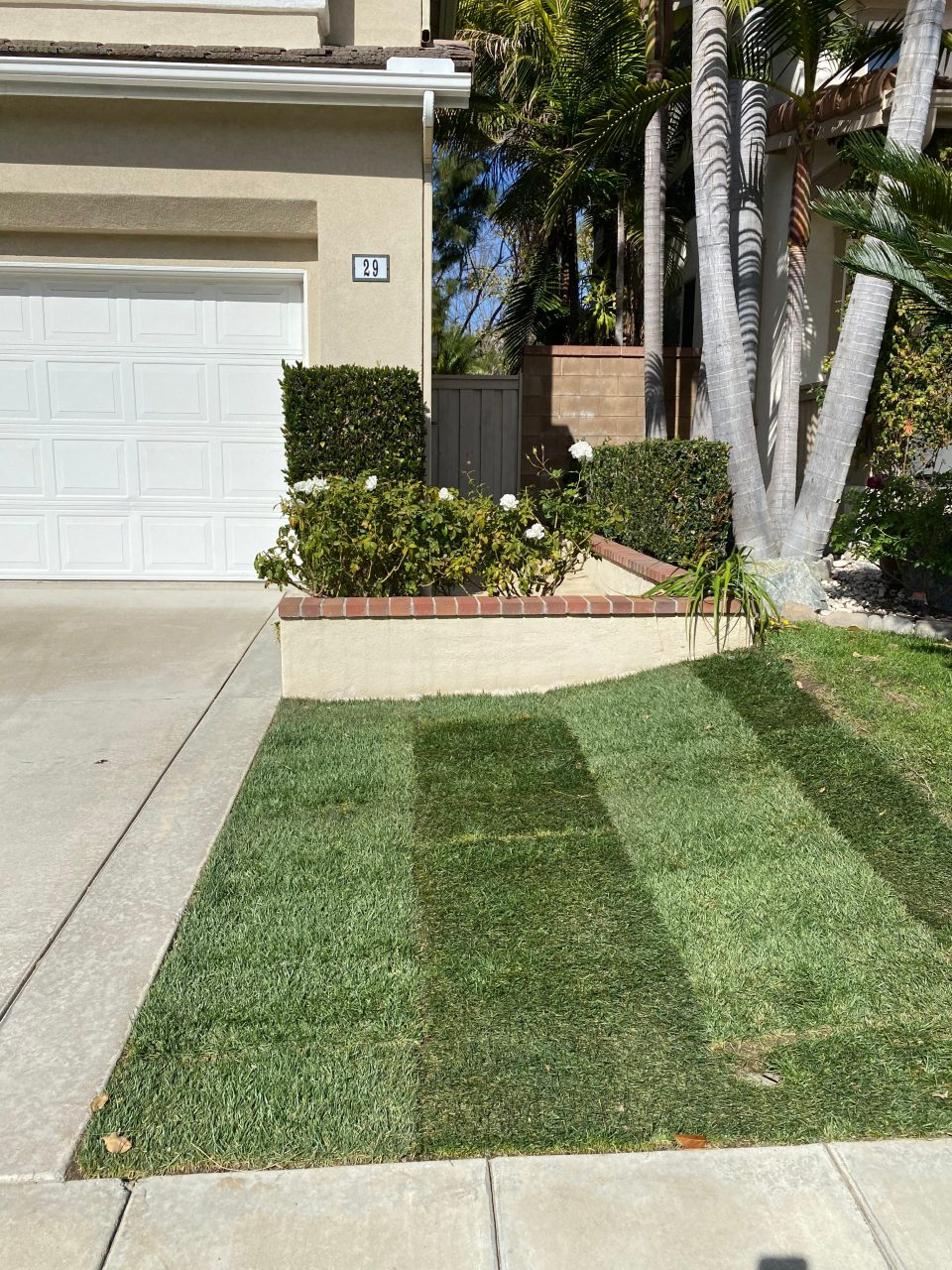 You can see here how we staggered the squares of sod