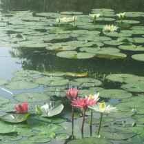 keindahan kolam