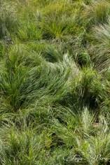 Green green green grass