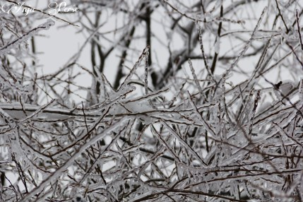 Small frozen branches