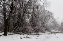 Fallen trees on a path