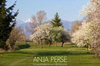 Spring1401