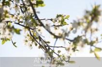 Spring1409