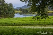 Radensko polje