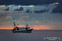Fishing boat and sunset