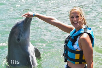 Swimming with dolphins, St. Kitts, Caribbean