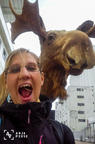 Moose, Kristiansand, Norway