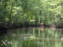 Canoe ride through mangroves