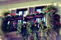 Balcony with flowers on the Piazza Navona