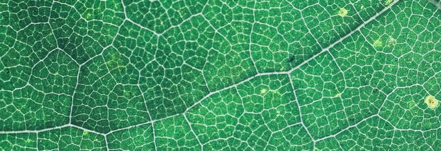 Chlorophyll für mehr Gesundheit, Vitalität und Lebensfreude